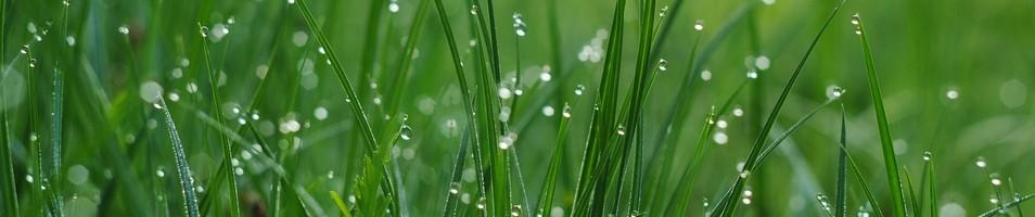 травяные шампуни